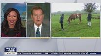 Gateway Horseworks is finding forever homes for horses