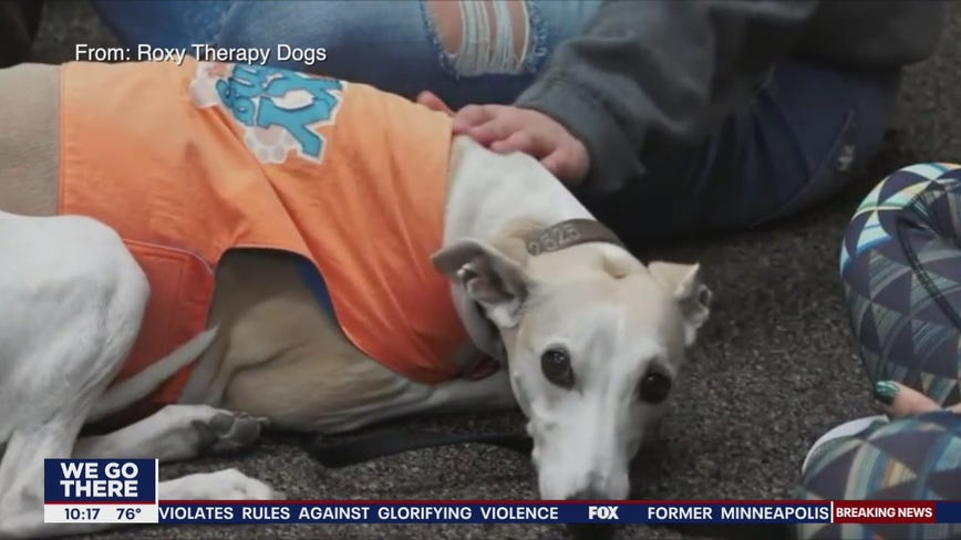 Organization trains therapy dogs for kids