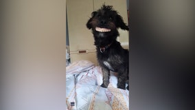 Denture-stealing dog becomes 'acci-dental' internet sensation