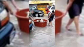 Couple rescues puppies after losing 'everything' to Hanna flooding in Mexico