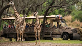 Disney World animals to star in new Disney+ TV show