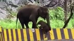 Elephant helps struggling calf scale roadside barrier in India
