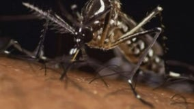 How to cope with the itchy issue of mosquitoes