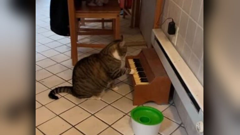 cat piano swns