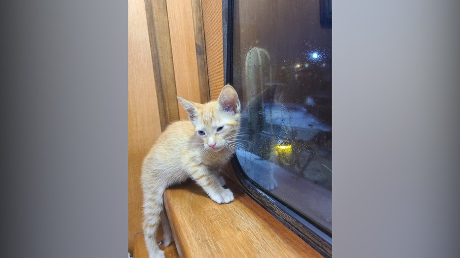 Cat-rescue7.jpg