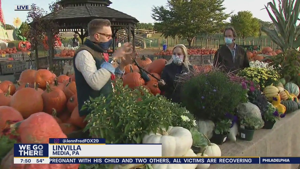Finding pumpkins and other gourds for decorations