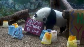 Giant panda twins celebrate birthday at Zoo Atlanta