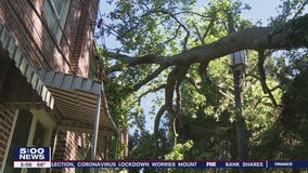 Tree hanging dangerously across power lines scares Upper Darby residents