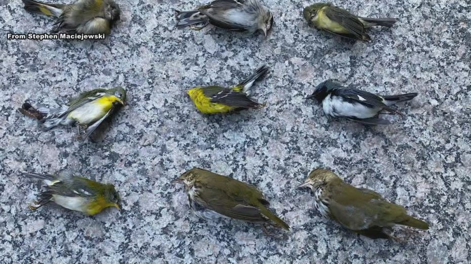 Philadelphia birds