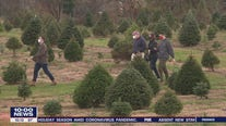 Bucks County residents flock to get Christmas trees