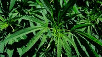 Across party lines, Americans embrace marijuana legalization in 2020 election
