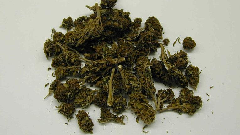 Loose buds of dried marijuana