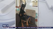 Chester Count family launches extensive search for missing 7-year-old Doberman