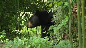 Hunters kill 22 on first day of New Jersey's black bear hunt