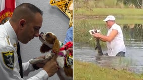 Puppy rescued from alligator's jaws becomes newest 'deputy dog' for Florida sheriff's office