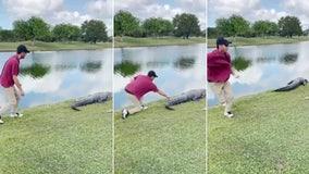 Florida golfer snatches ball stuck on alligator's tail