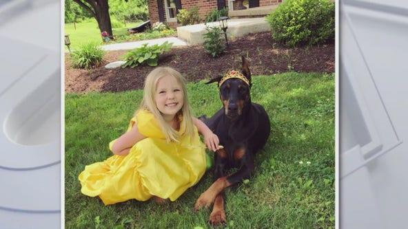 Chester County family launches extensive search for missing 7-year-old Doberman