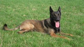 New Castle County police announce death of retired K9 Officer Diablo