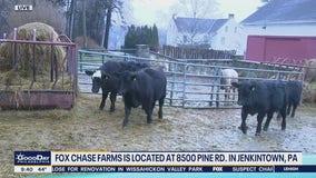 Kelly's Classroom: Fox Chase Farms