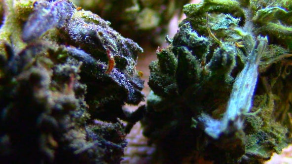 Delta 8: A legal 'Weed Light'?