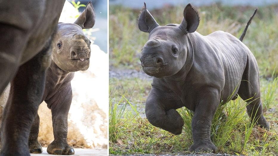 zoo-miami-baby-rhino-2.jpg