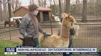 Bob on the Job: Alpaca Trainer