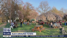 Alex Around Town: Philadelphia Cherry Blossoms reach their peak