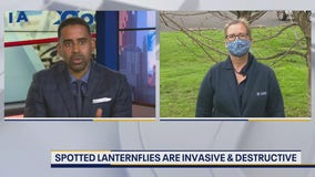 Stopping the spread of the Spotted Lanternfly