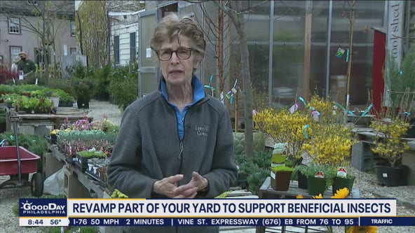 Revamp part of your yard to support beneficial insects