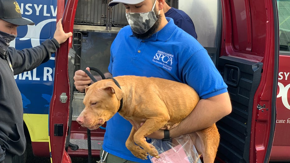Five dogs rescued by PSPCA