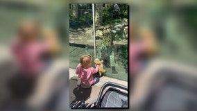 Toddler waves stuffed cat in front of Amur leopard at Philadelphia Zoo