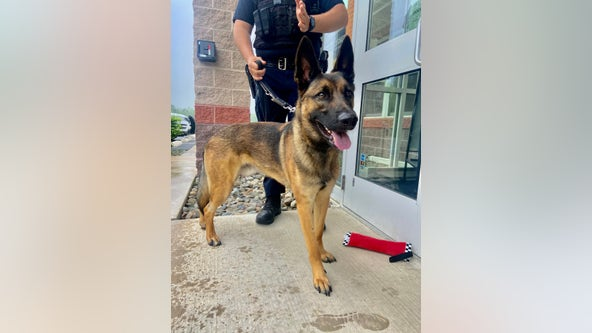'We're best buds': Shelter dog finds calling as Lower Southampton K-9 officer