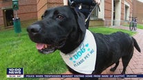 Comfort dog Marley digs his way into Chester County
