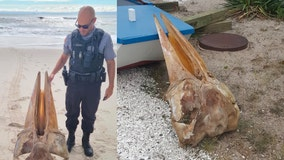 Officials identify large skull found on New Jersey beach Monday