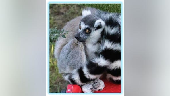 Man accused of stealing lemur from San Francisco Zoo faces federal charges