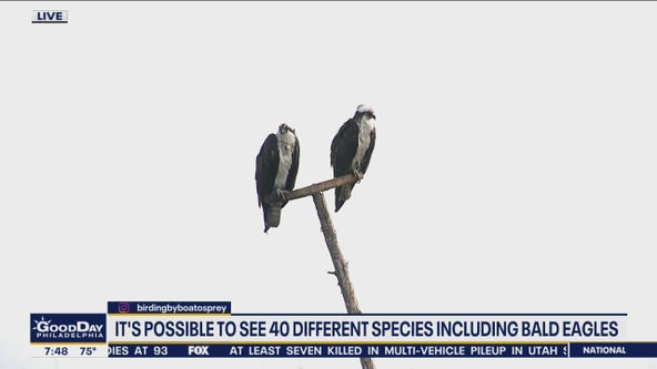Birding by Boat offers opportunity to see 40 different species including bald eagles