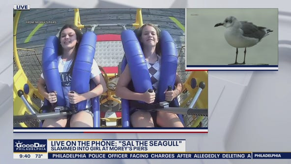Seagull 'speaks out' after viral collision with rider at amusement park