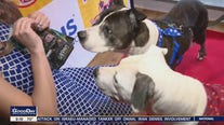 Chestnut Hill hosts annual Pet-A-Palooza this weekend