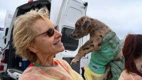 Over 100 shelter pets from Louisiana airlifted to New Castle County as Hurricane Ida looms