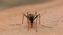 Clementon resident tests positive for West Nile virus