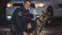 Beloved Hatboro K9 officer fighting for his life after allergic reaction to bee sting