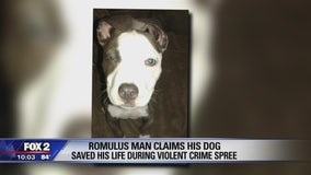Dog dies after protecting family from Romulus gunman
