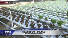 Nature meets technology at Oakland Urban Growers