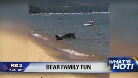 Mama, baby bears seen splahing in Lake Tahoe