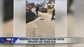 Roseville police investigating after video shows officers use stun gun on loose dog