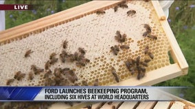 Ford launches beekeeping program