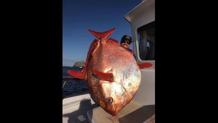 Aloha Spirit Sportfishing_1495465100208-407068.jpg
