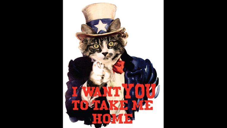 Cat Independence Days - I want you... to take me home_1466440254674.jpg