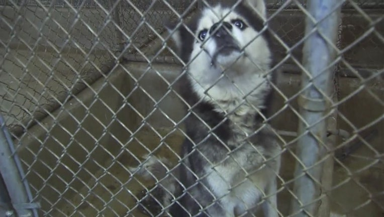 DAC_responds_to_animal_abuse_allegations_1_20151019212014