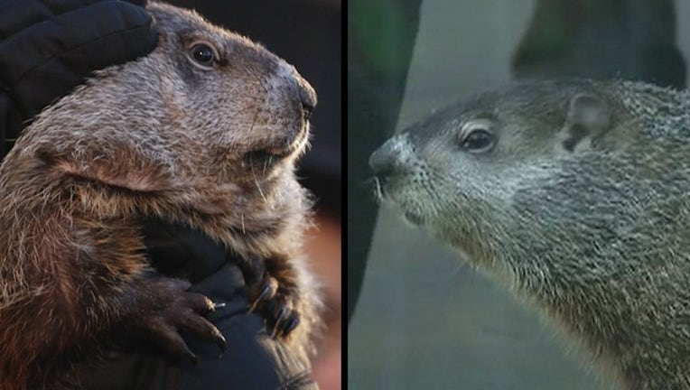 FD_0126C Groundhog Day Phil vs Chuck v2 PIC0_1517354613603.png-400801-400801.jpg